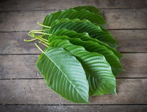 Kratom for Workouts