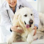 Pet Prescription from a Vet Online
